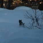 Fröken Långben i snön