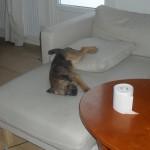 Saffran sover a la Pippi Långstrump